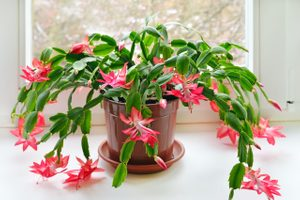 This Thanksgiving Cactus Is the Perfect Turkey Day Centerpiece