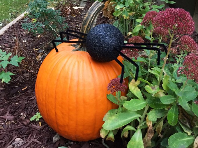 Giant spider in the yard crawling over a pumpkin
