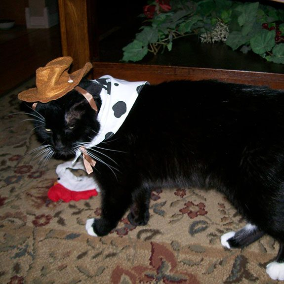 Black cat with white markings wearing a cowboy hat and handkerchief