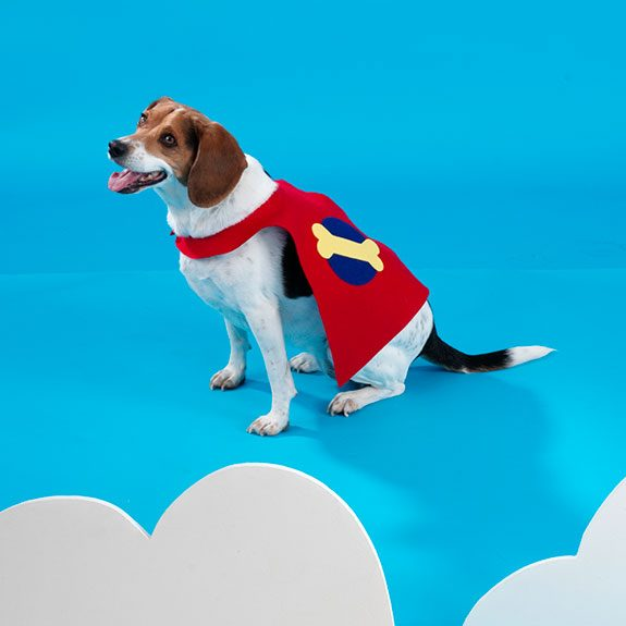 White and brown dog in a red cape with a bone on it
