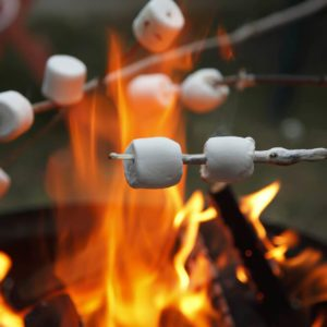 Multiple marshmallows extended over a camp fire to roast