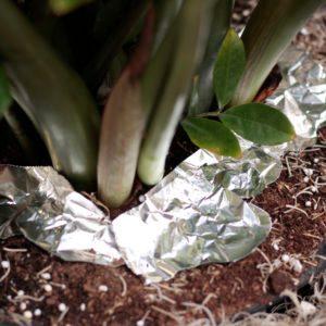 Aluminum Foil; Garden; Pests; Garden Pests; Plants; Protect Plants
