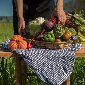 Woman holding a basket of freshly harvested vegetables in garden.