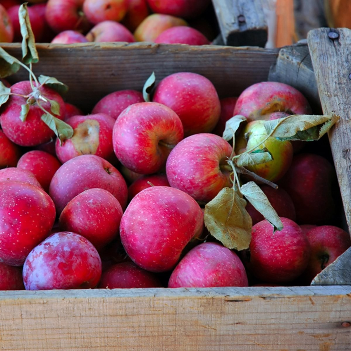 Winesap Apples in Packing Crate