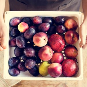 A Guide to the Most Popular Types of Stone Fruit