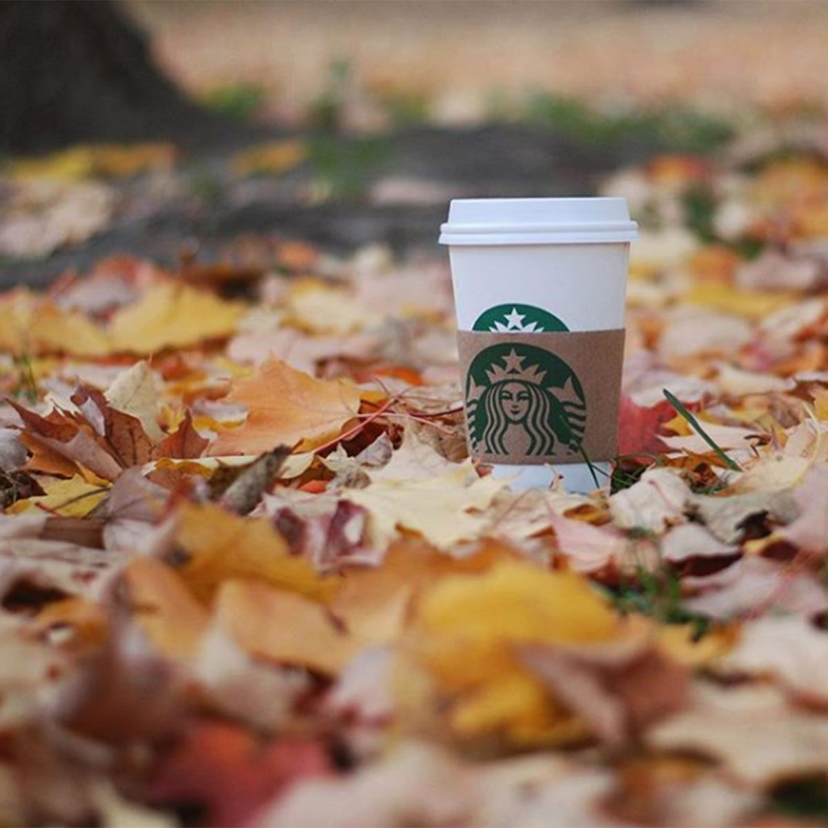 Pumpkin Patch Latte