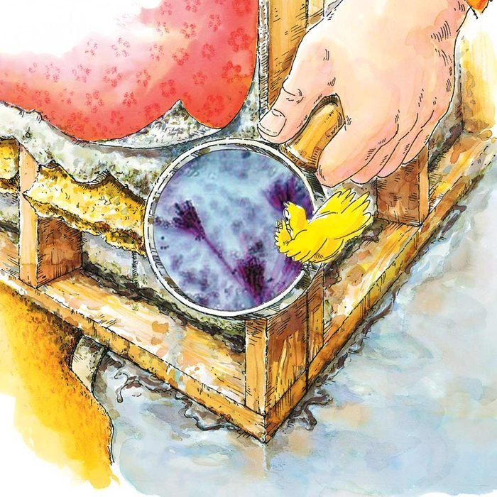 Illustration of person holding up a magnifying glass to show mildew