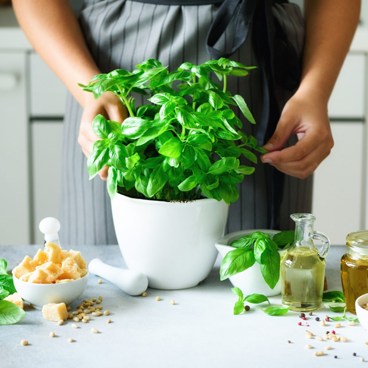 Woman in style apron holding pot with fresh organic basil, white kitchen interior design.