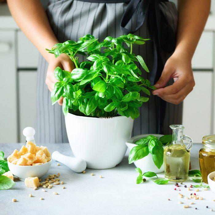 Woman in style apron holding pot with fresh organic basil, white kitchen interior design.