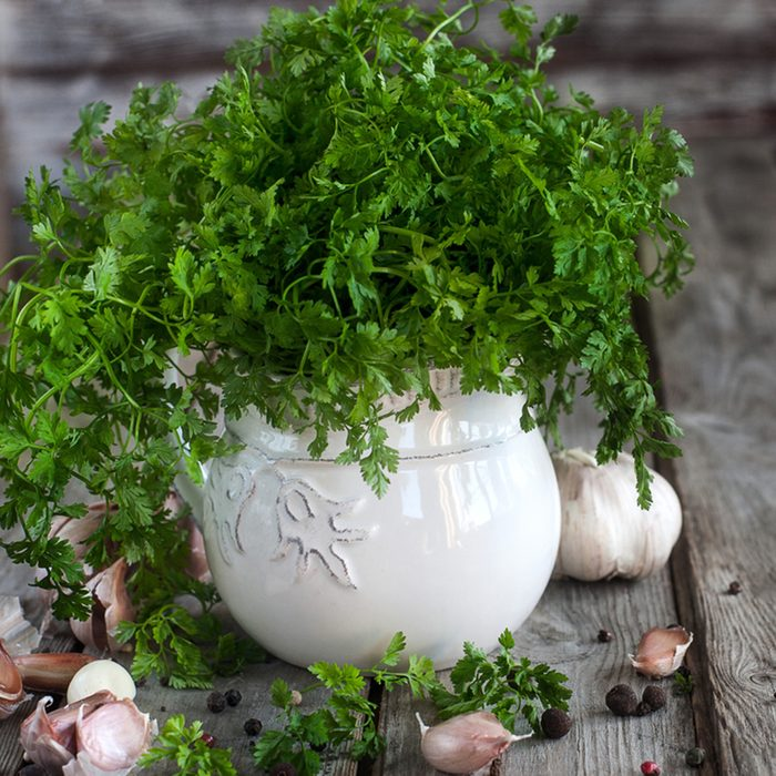 Bunch of chervil on chopping desk with garlic and pepper.
