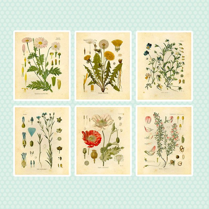wedding anniversary gifts Botanical Prints Wildflower Floral Wall