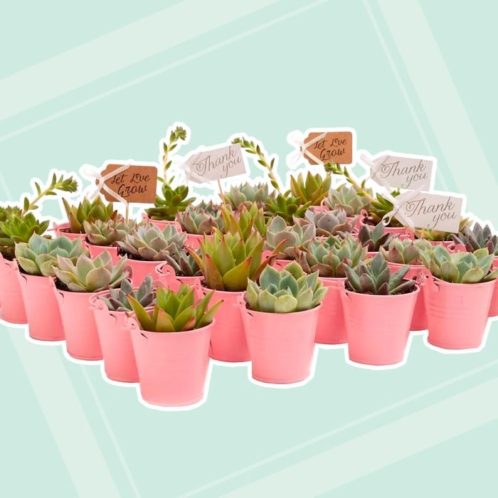 wedding thank you gifts The Succulent Source 2 In Wedding Event Rosette Succulents Plant With Pink Metal Pails