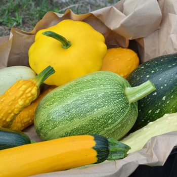 9 Types of Summer Squash (and How to Cook Each One)