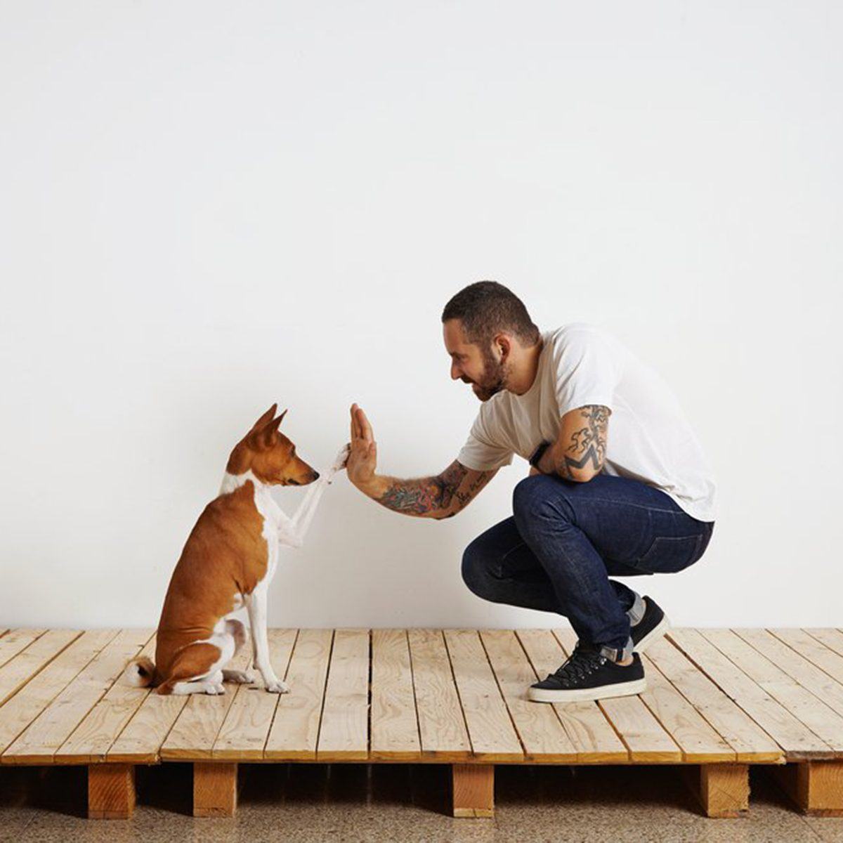 Small dog offering their human a high-five