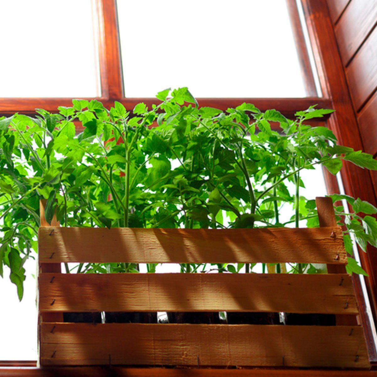 Build an Indoor Window Box for Maximum Sunlight