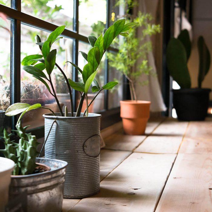 dfh1_shutterstock_240381874 house plants green house gardening