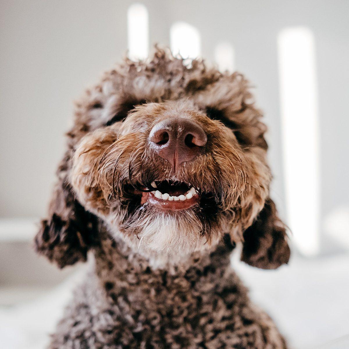 Furry dog close-up