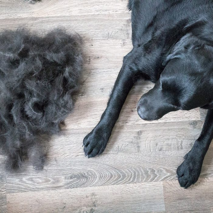 Large dog beside a large pile of hair