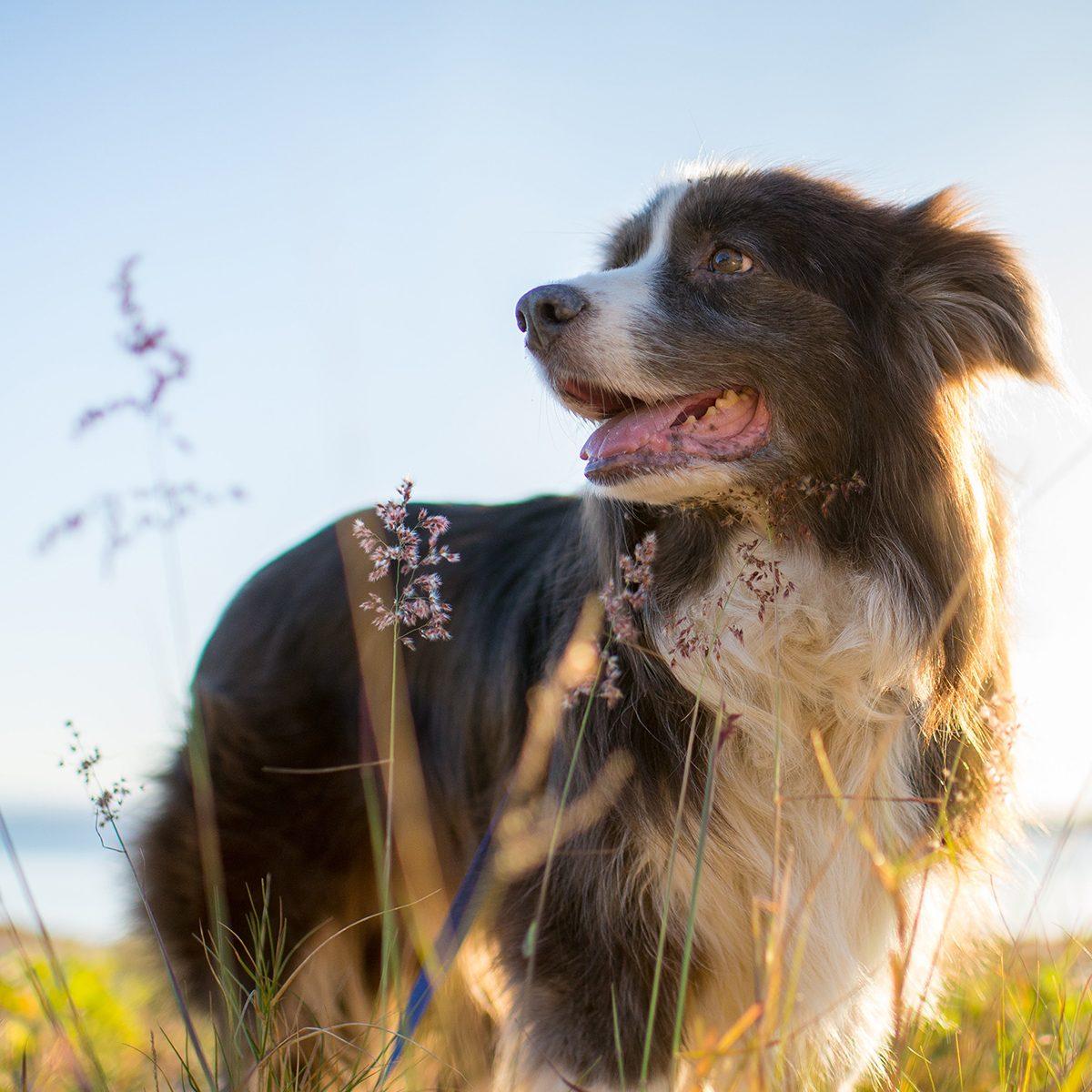 Dog outside sunshine