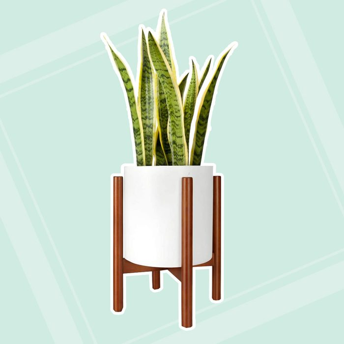gifts for men Mkono Century Display Planter Included