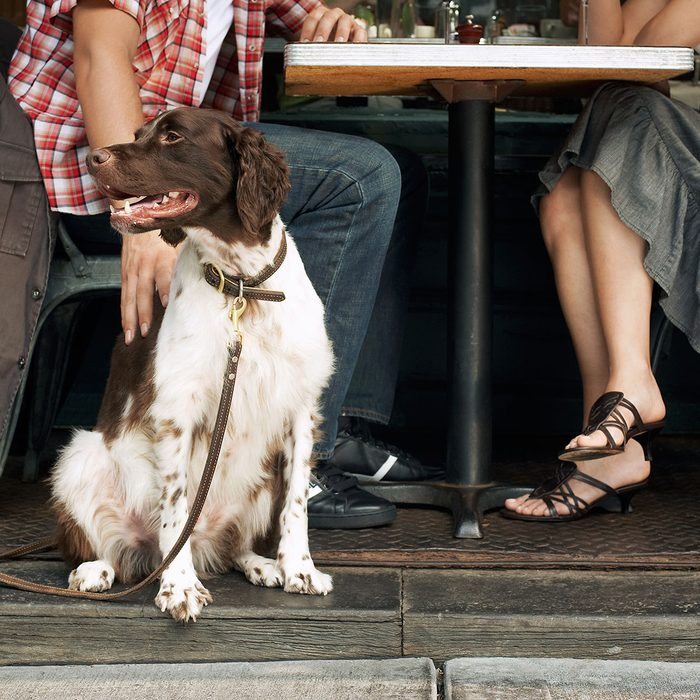 Couple sitting with a dog at restaurant