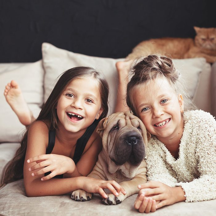 Home portrait of two cute children hugging with ginger cat and puppy of Chinese Shar Pei dog on the sofa against black wall; Shutterstock ID 451456273; Job (TFH, TOH, RD, BNB, CWM, CM): tfh
