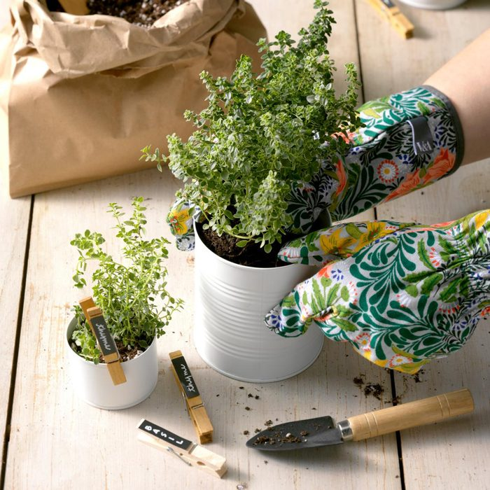 hands adding sprout to white can with gardening tools