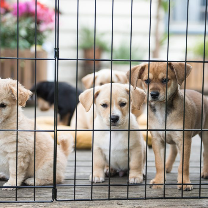 Puppies behind a grate