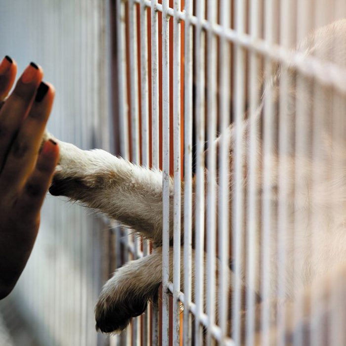 Puppy reaching paw through bars towards a human hand