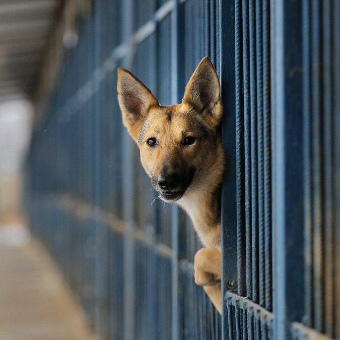 Dog peeking through bars