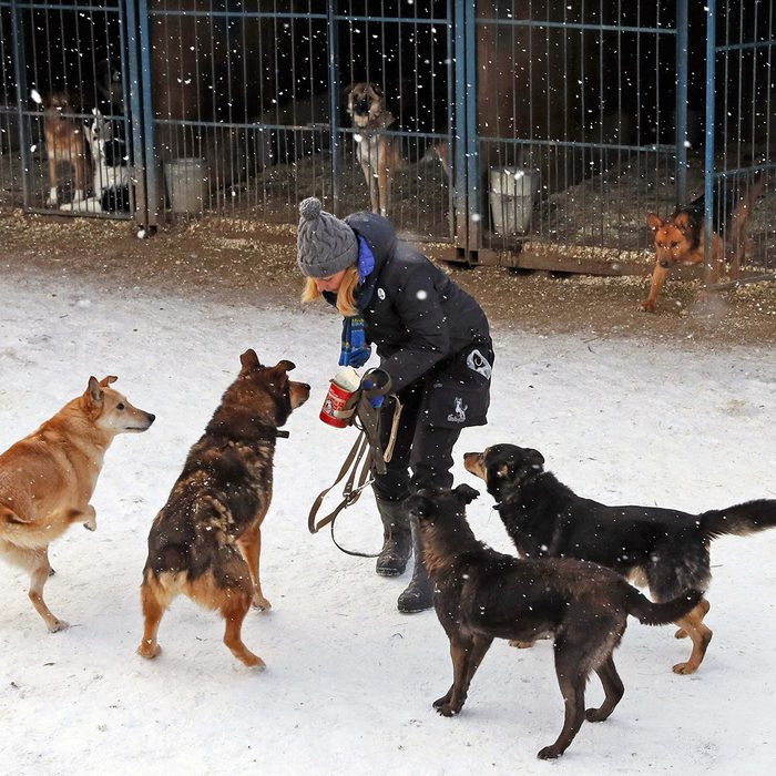 Person playing with multiple dogs in the snow