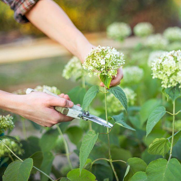 Cutting flower