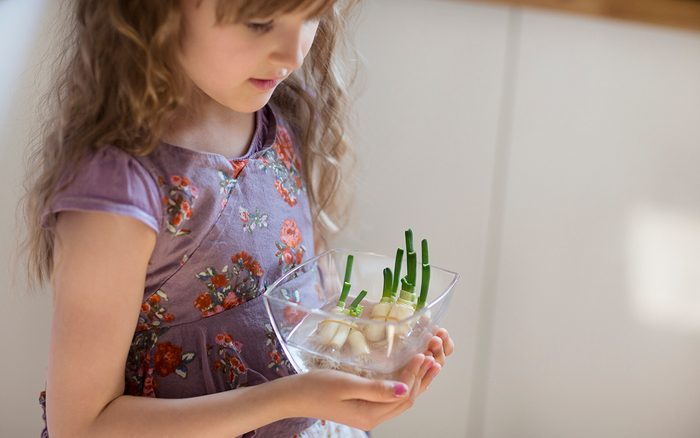 Child holding a bowl of leftover spring onion roots starting to regrow green shoots