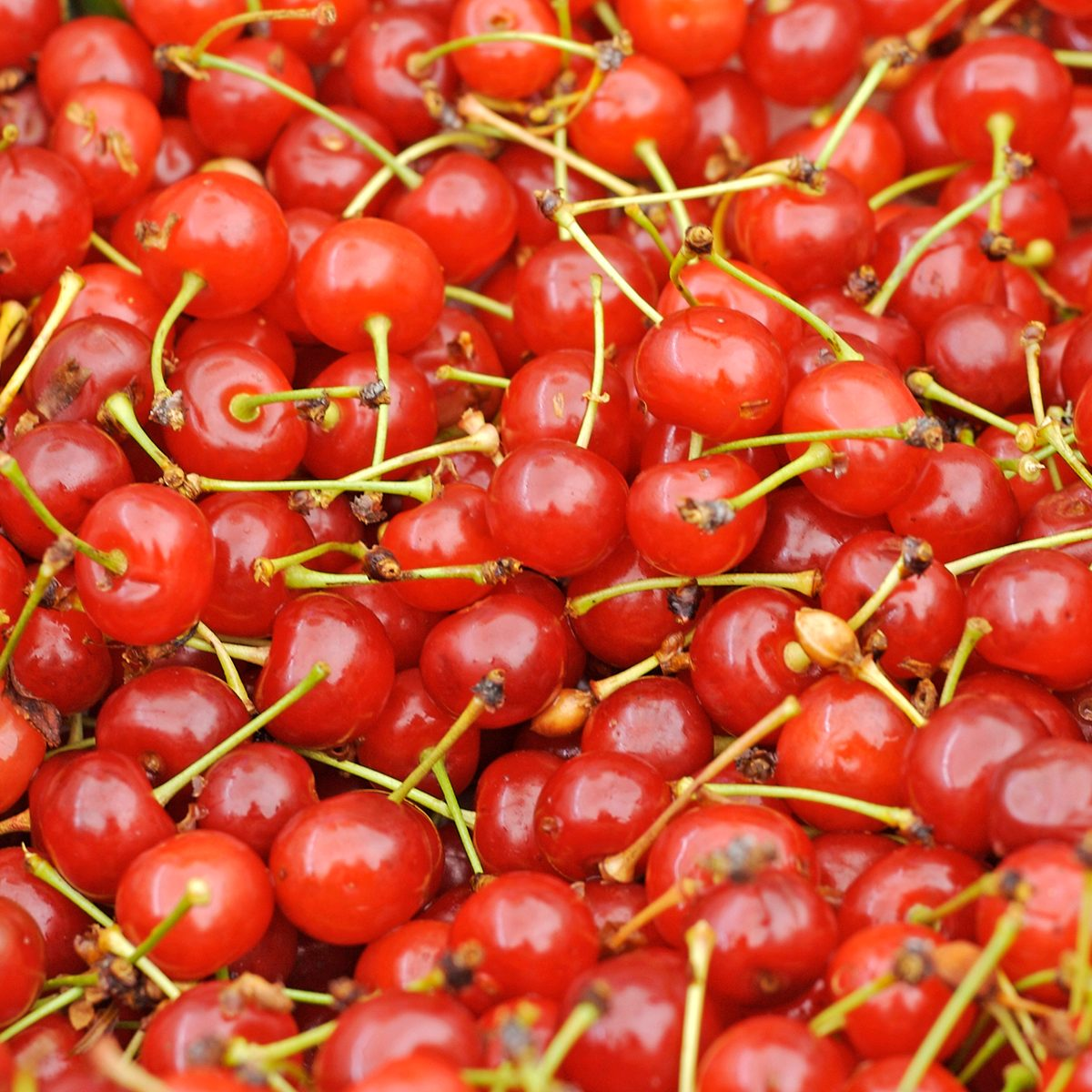 Montmorency Cherries at the Market