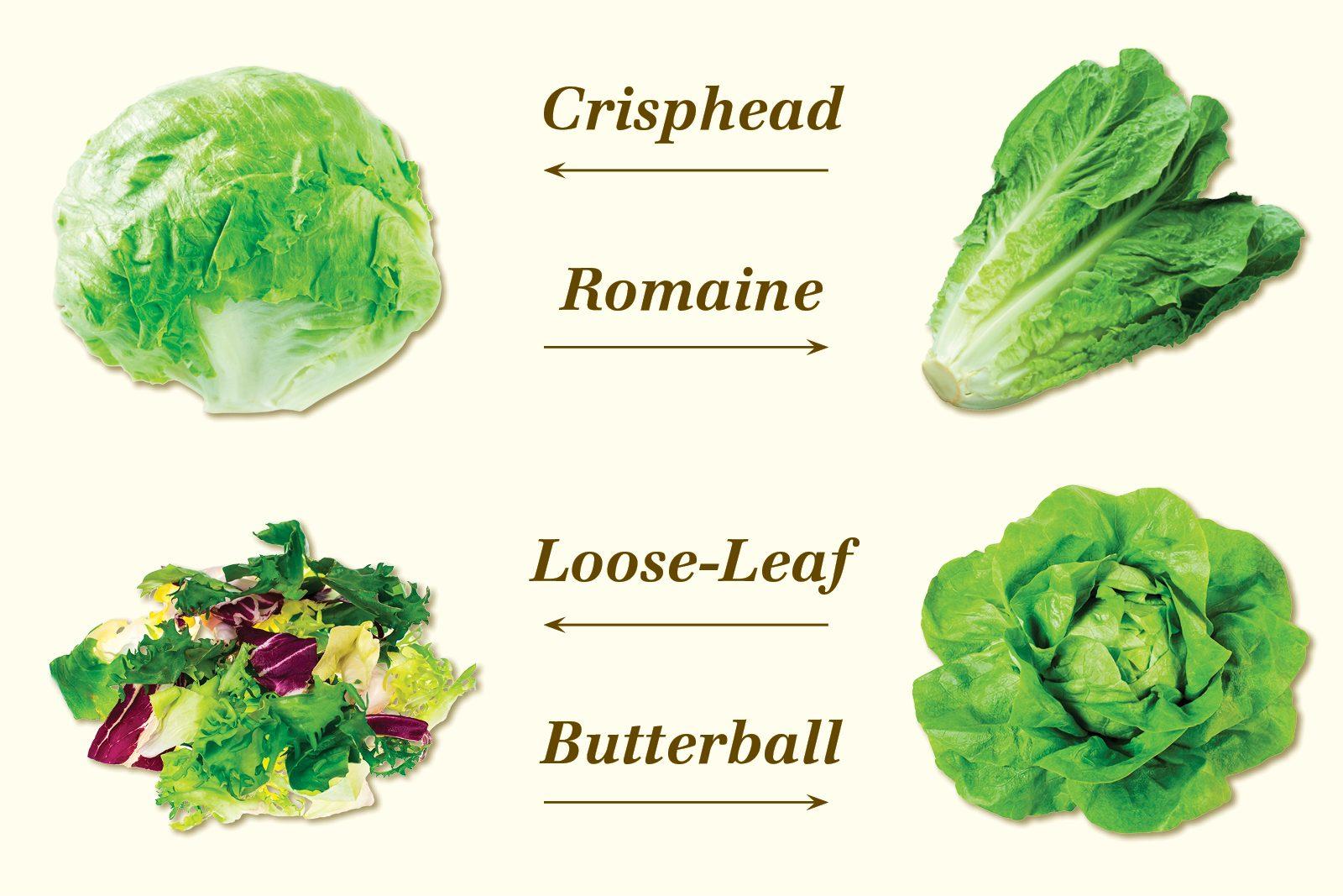 lettuce types graphic