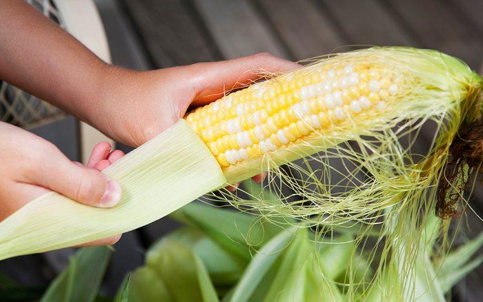 A child's hand shucking (husking) a fresh ear of corn.