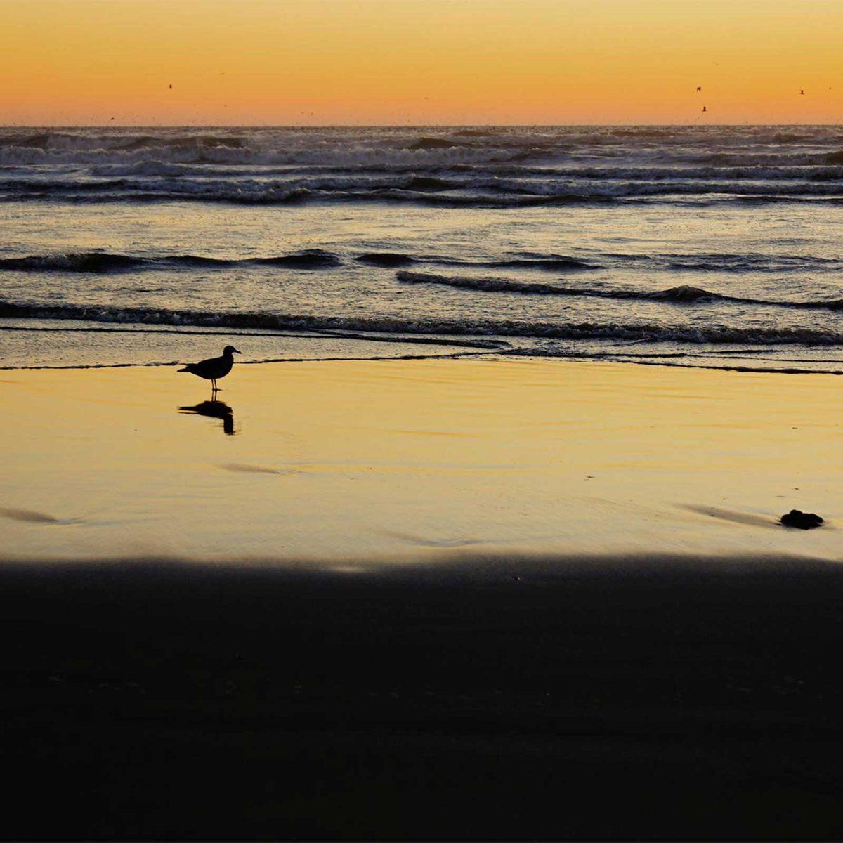 Long Beach Peninsula, Washington