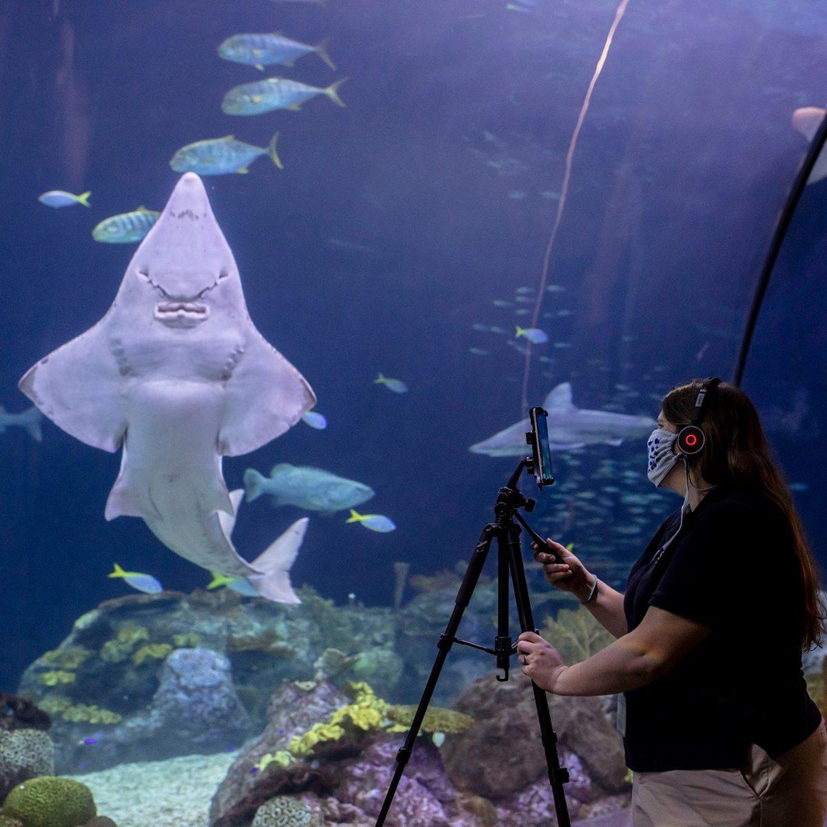 Shedd Aquarium filming videos for virtual tours
