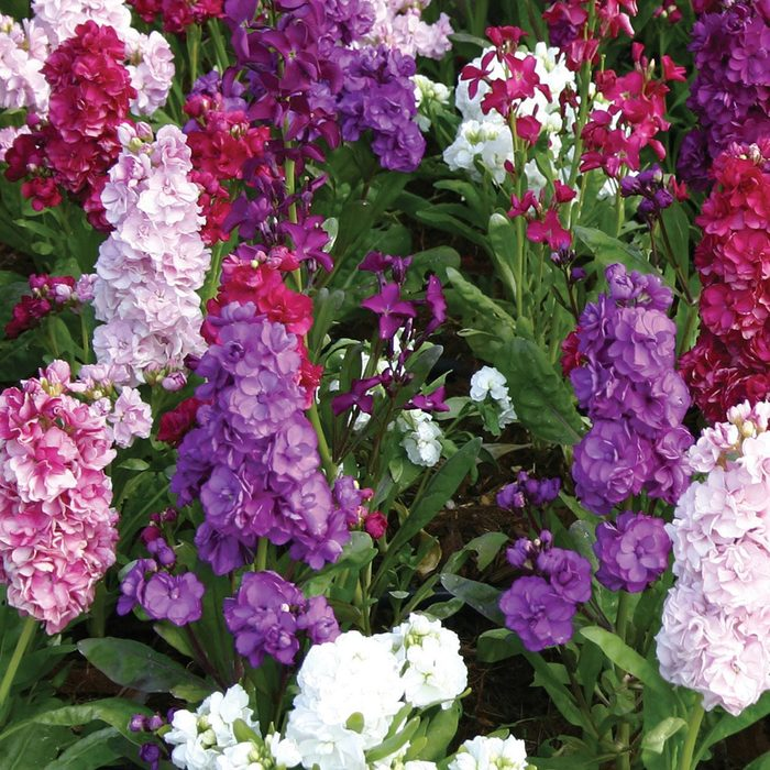 Stock Harmony Mix best smelling flowers