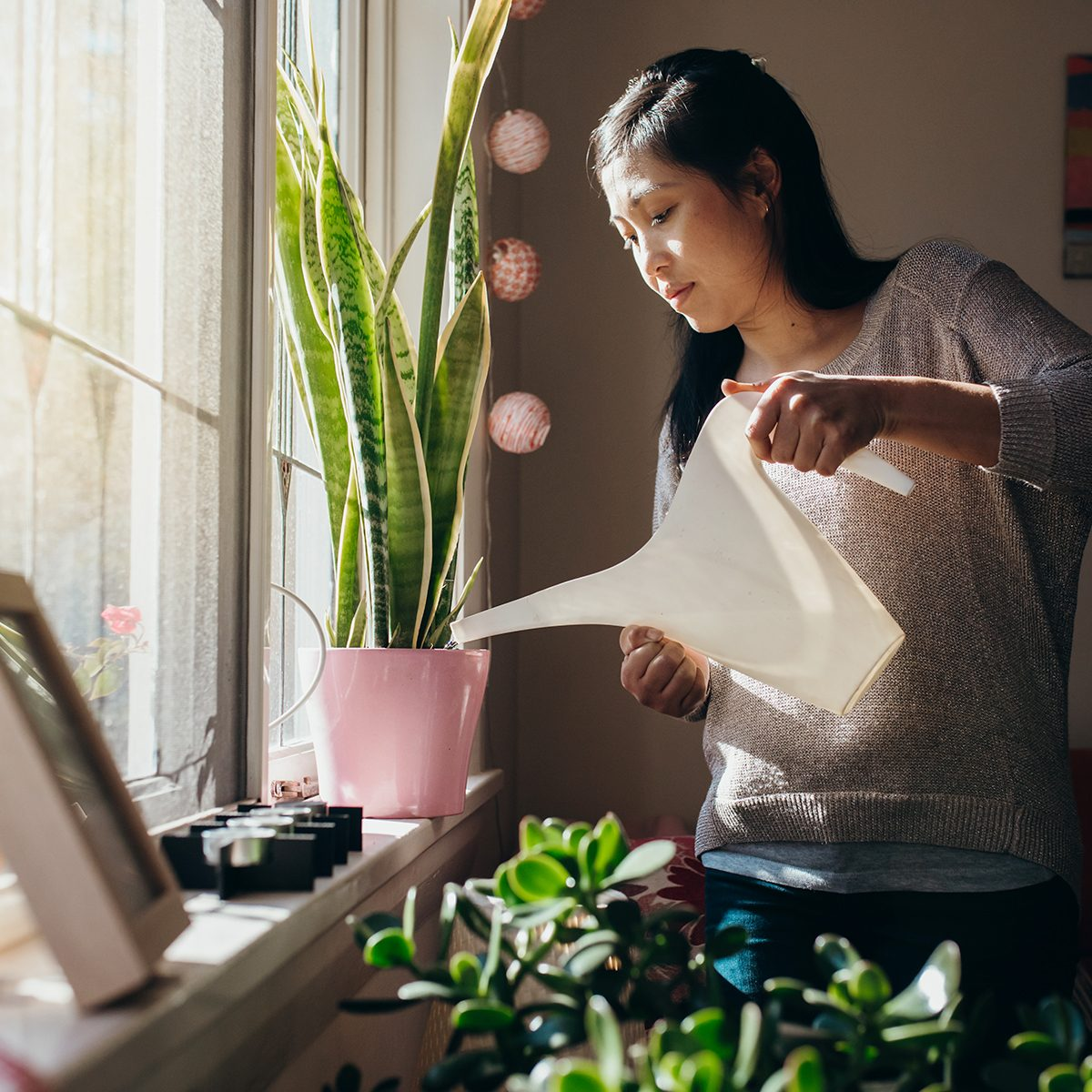 Australian Chinese woman waters the plants in her Sydney apartment