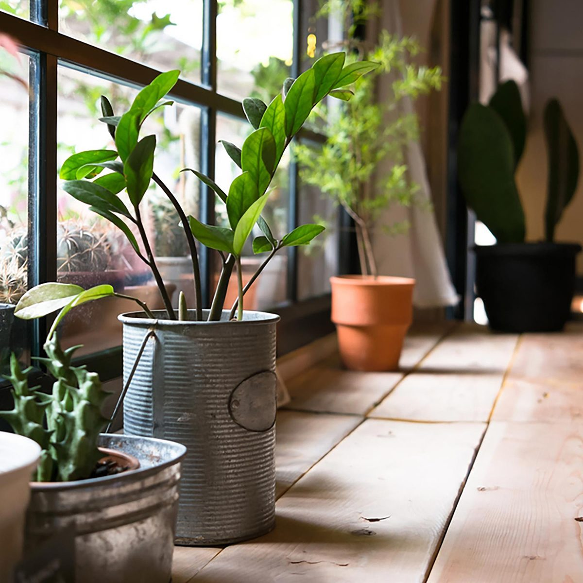 Several potted plants in front of a window