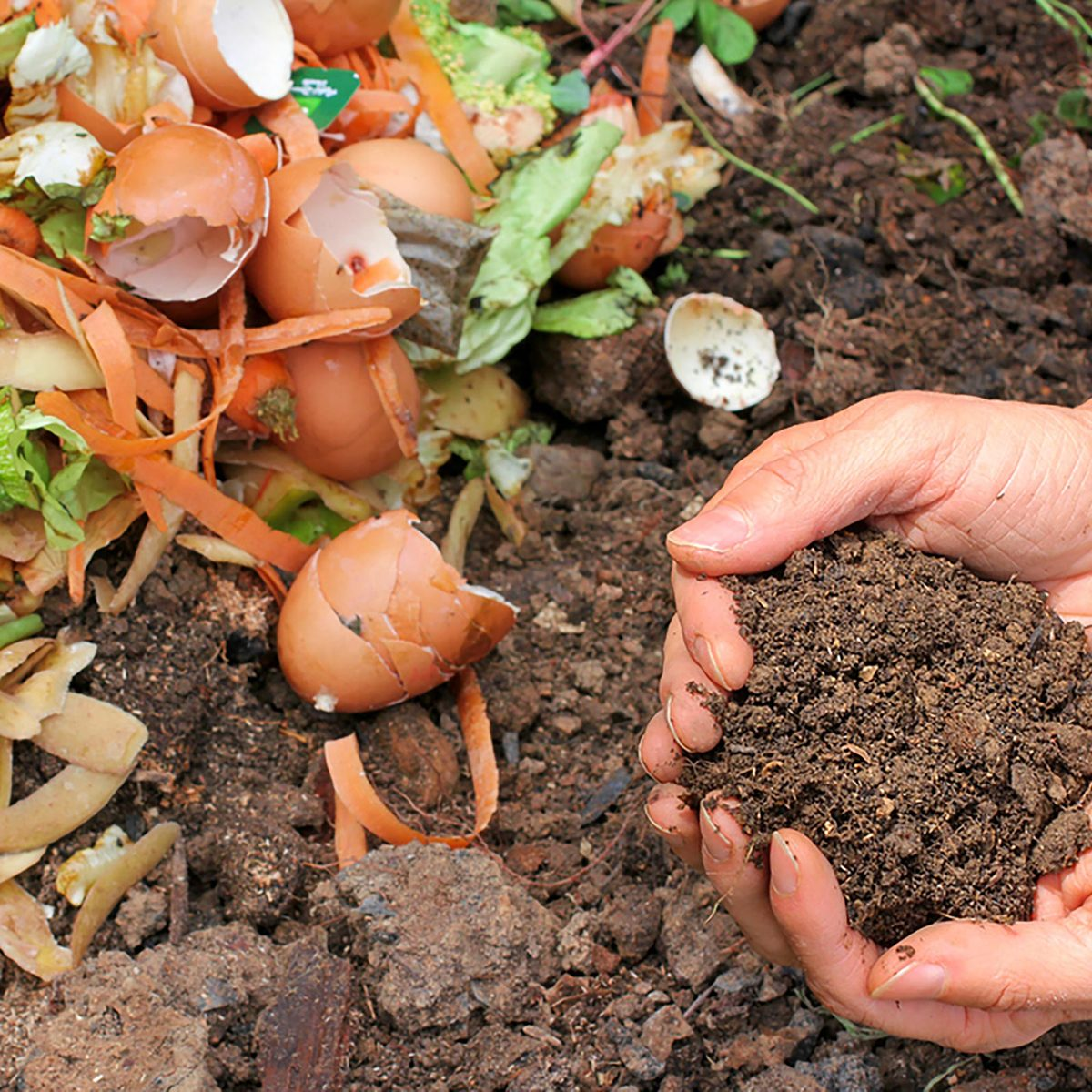 Compost - egg shells and vegetable scraps