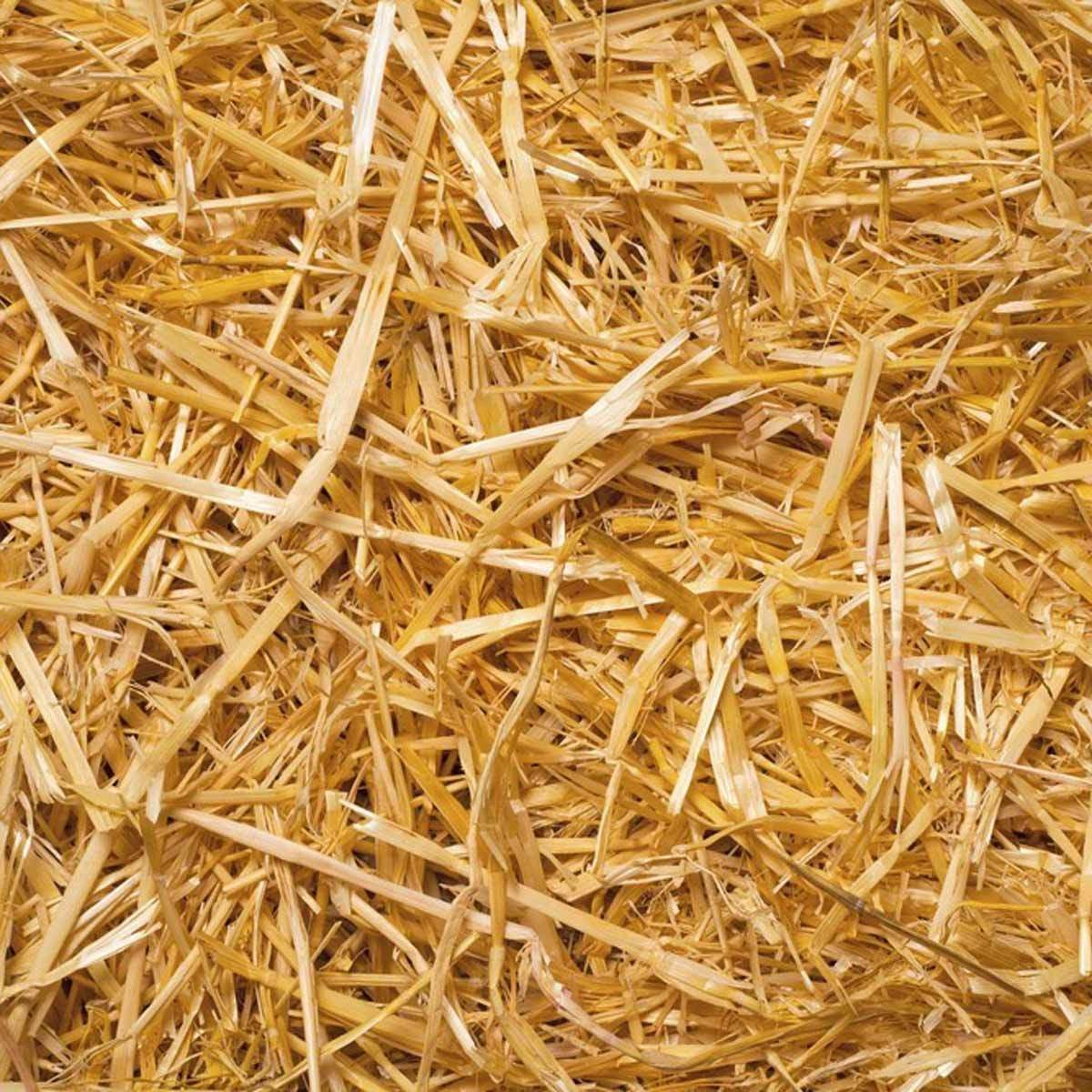 dfh17sep038_127725506_08-1200x1200 insulate straw hay