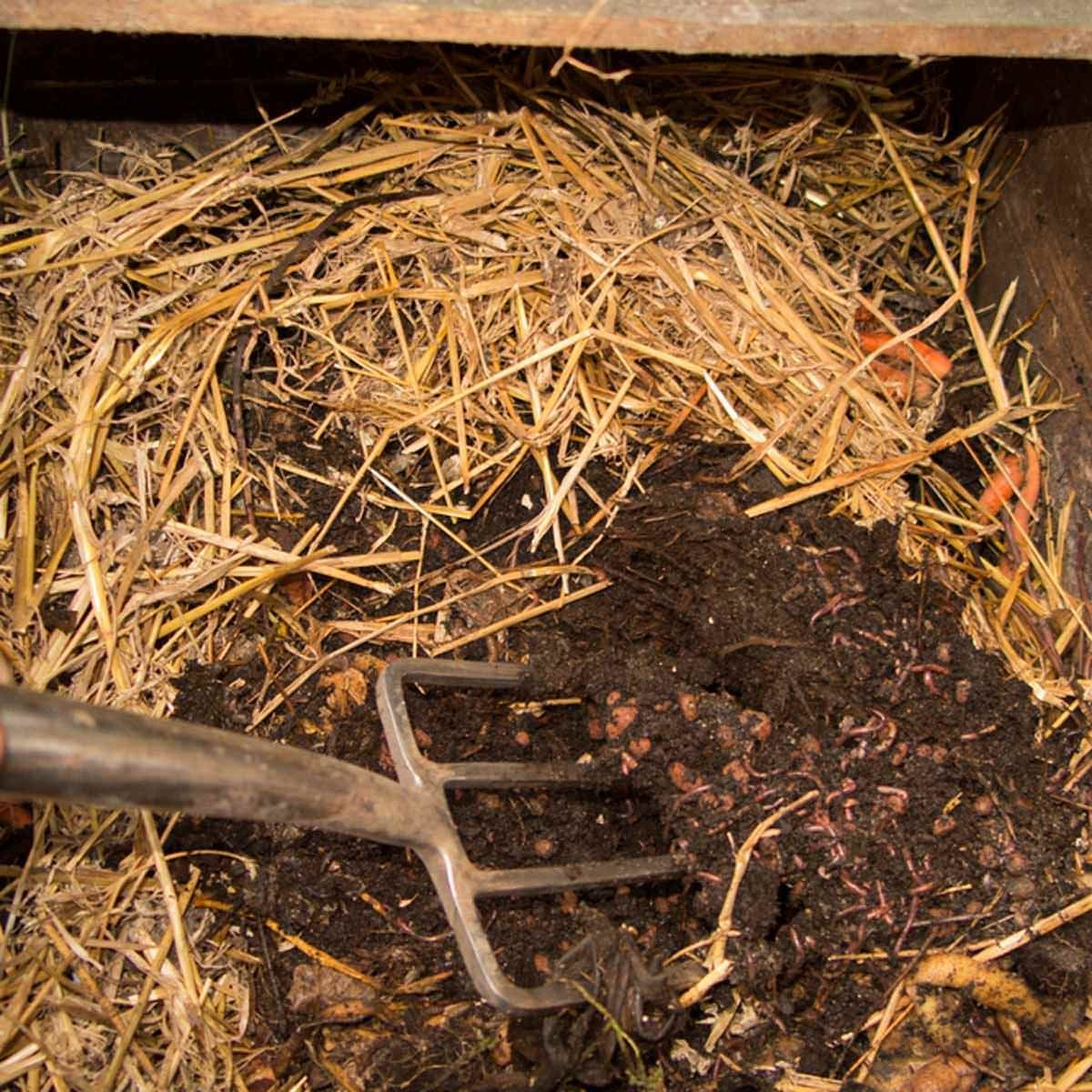 fh11_568408396 compost worms hay