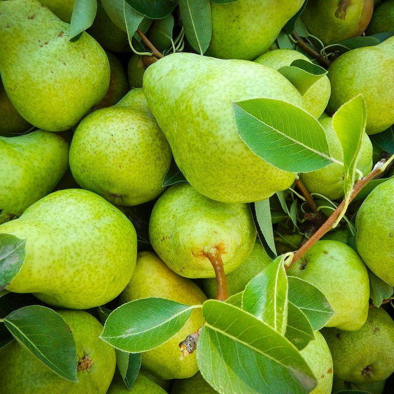 Green pears with leaves