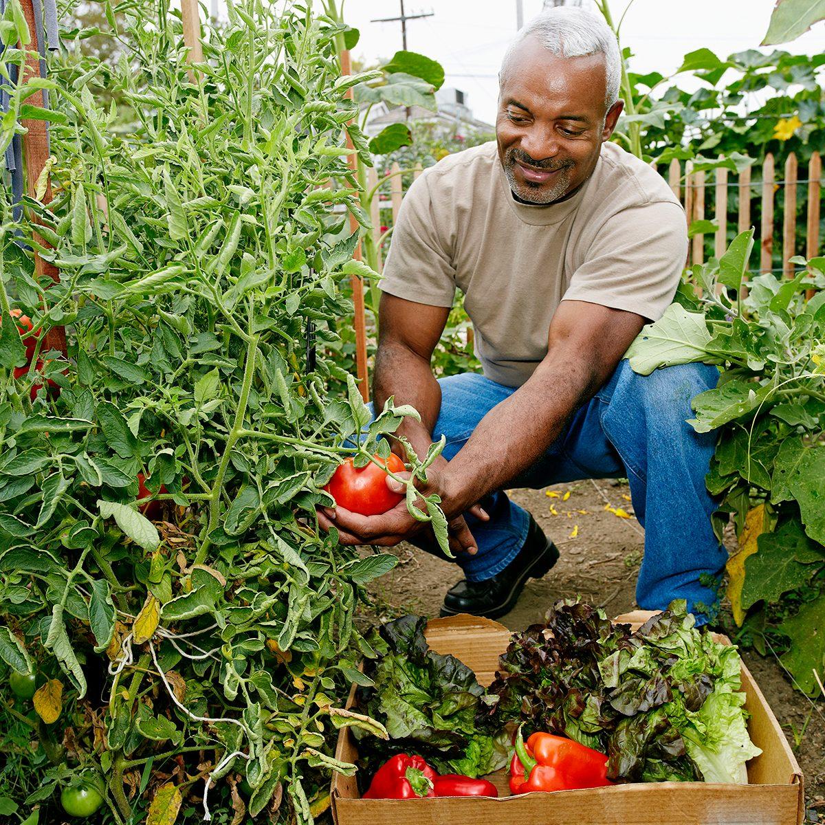 THOUGHTFUL ​ CONSUMPTION​ Food Trends Report, Black man gathering vegetables in community garden