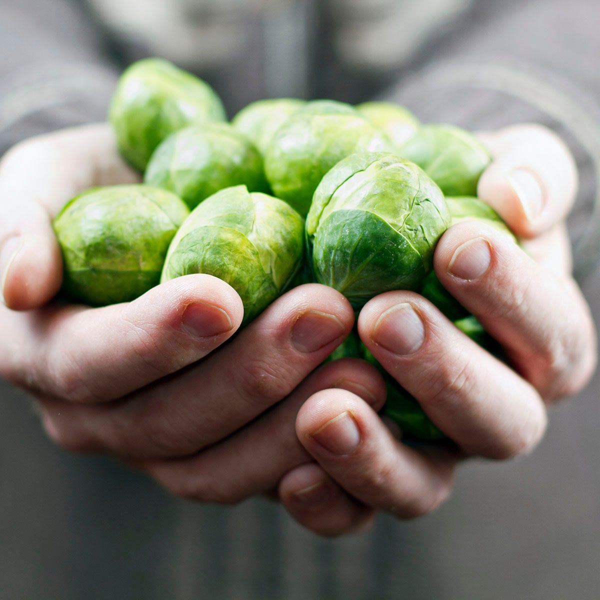 Mans hands holding handful of Brussels sprouts.