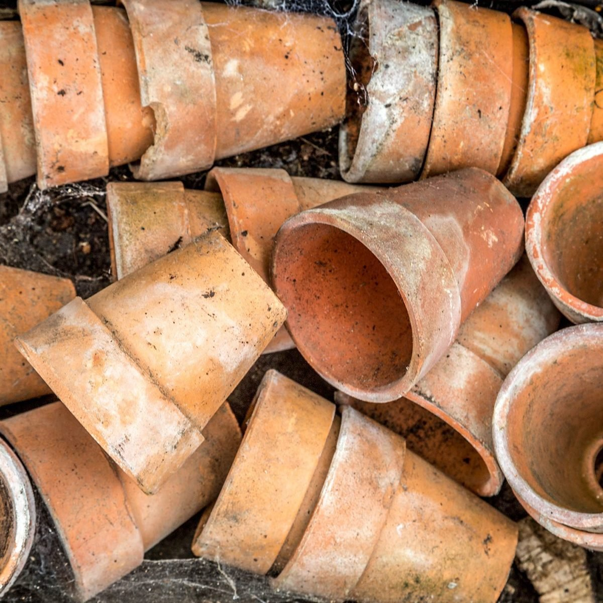 Old terracotta plant pots in a box.