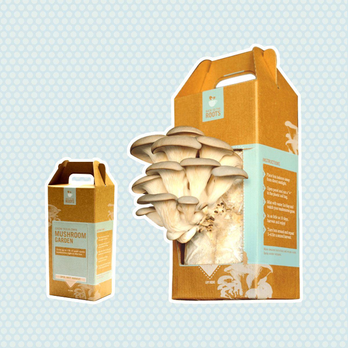 Mushroom Garden Kit