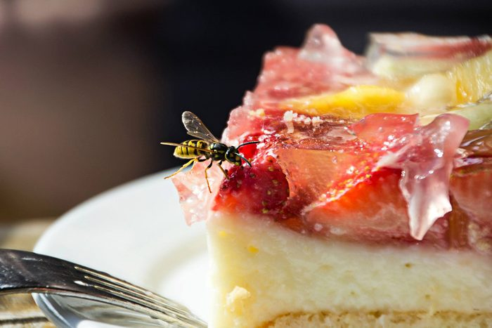 Close Up Of Wasp On Food for How to Keep Wasps Away Guide